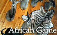 African Game Taxidermy
