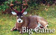 Big Game Taxidermy